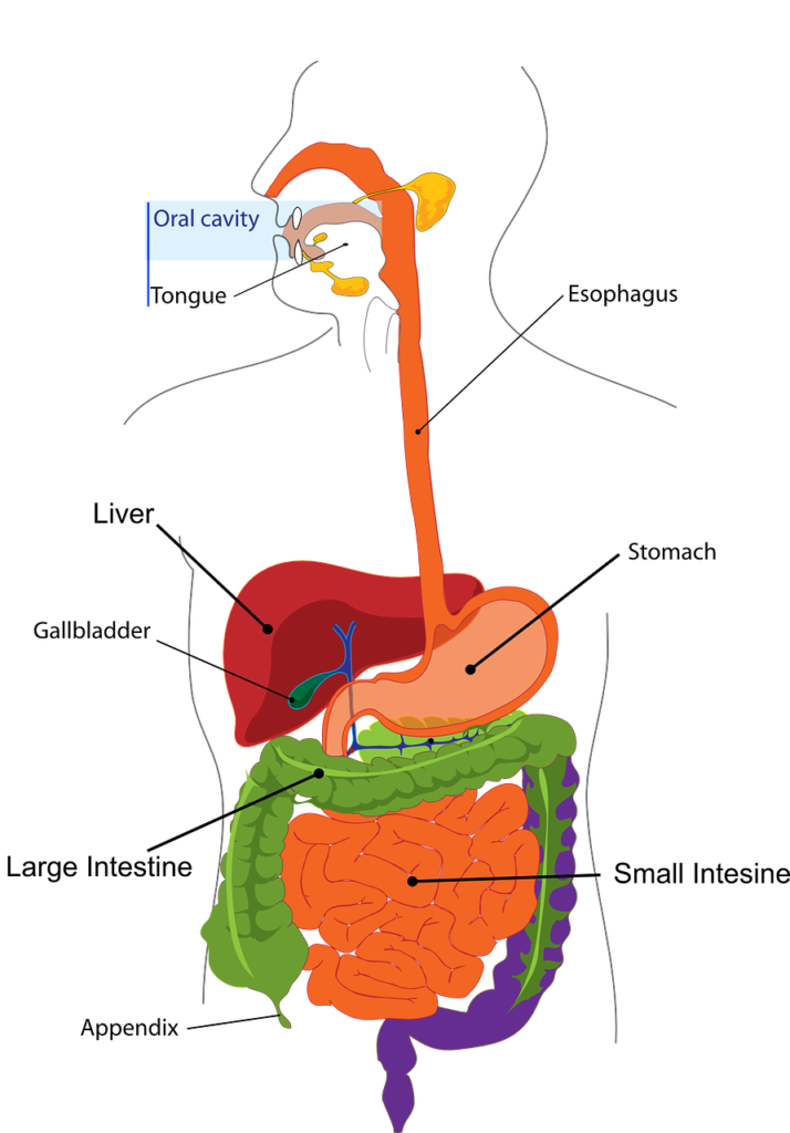 Cholecystitis - Symptoms, Diagnosis & Treatments